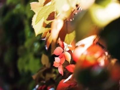 秋季来临,写真机日常保养的注意事项!