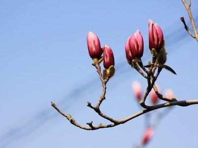 早春三月,压电写真机维护保养的须知技巧